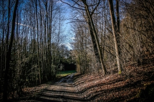 Durch ein kurzes Waldstück