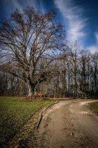 Baum mit Kruzifix