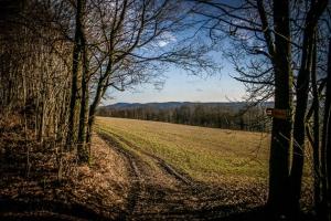 Aus dem Wald hinaus
