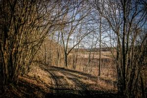 Kurze Wegetappe durch eine Hecke