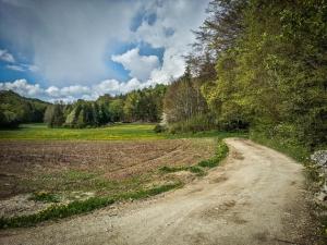 Breiter Weg am Waldrand entlang