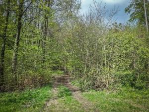 Weg auf den Wald zu