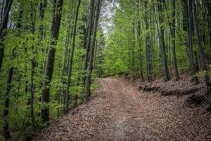 Weg im Wald bergauf