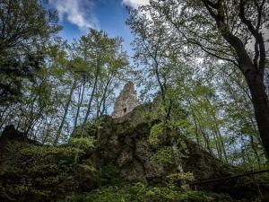 Ruine Wildenfels im Wald