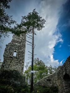 Ruine Wildenfels ragt auf