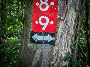 Wegweiser am Baum