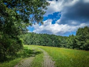 Gepflasterter Weg an Hecke entlang