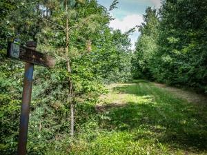 Wiesenweg am Wald