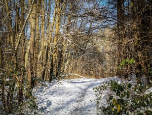Weiter im Wald
