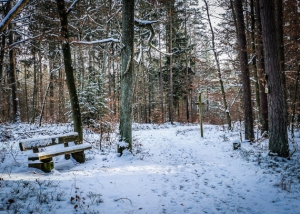 Holzbank am Wegrand