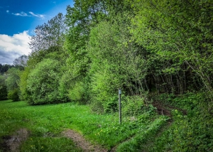 Wanderpfad in den Wald