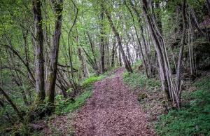 Breiterer Wanderpfad im Wald