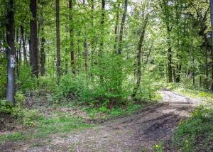 Weg nach rechts in den Wald