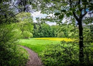 Weg an den Waldrand