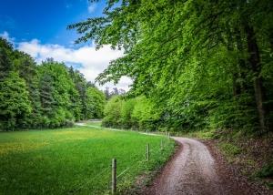 Wieder an Waldrand entlang