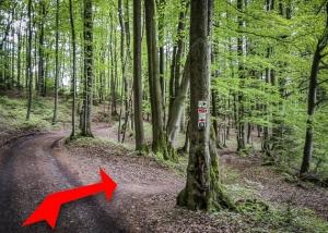 Auf anderer Seite des Forstweges weiter