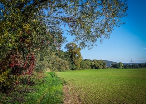 Schöner Weg an Hecken entlang