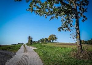 Der Weg hoch über dem Maintal