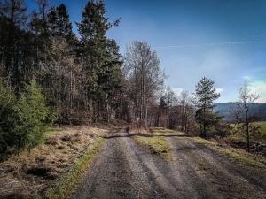 Weggabelung am Waldrand