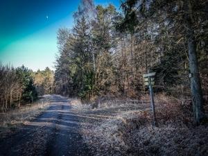 Wegweiser am Waldrand