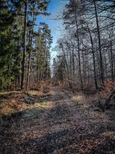 Gerader Weg im Wald bergauf