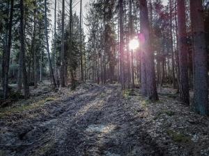 Nasser Weg im Wald