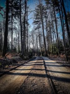 Sonniger Wald auf dem Hochplateau