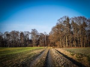 Weg in Richtung Wald