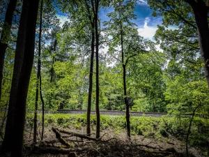 Weg parallel zur Bahntrasse im Wald