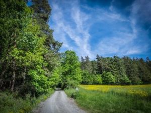 Weg am Waldrand entlang bergauf