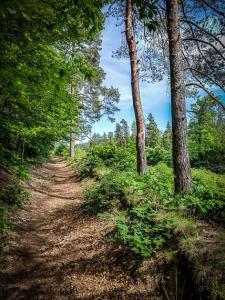 Wunderbar idyllischer Wanderpfad