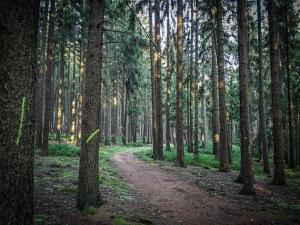 Wanderpfad im Wald