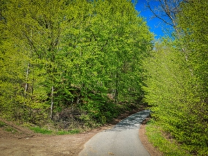 Dem geteerten Weg in den Wald folgen