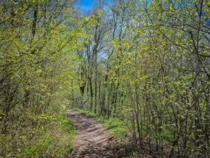 Weg durch Hecken und junge Bäume