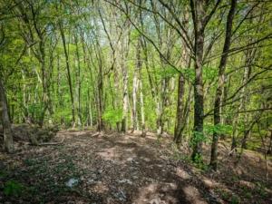 Steiler steiniger Pfad im Wald bergab