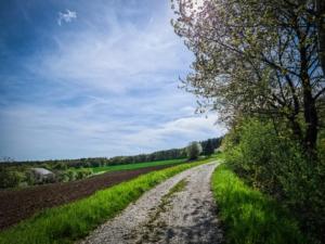 Weg an Hecke entlang