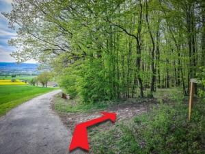 Abbiegen nach Rechts in den Wald Richtung Friesen