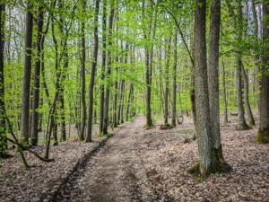 Erst auf breitem Weg durch den Wald
