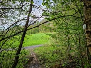 Wieder am Waldrand nach rechts oben