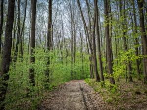 Wieder im Wald