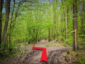 Im Wald nach links unten abbiegen
