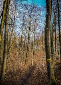 Lichter Wald am Zabelstein