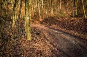 Auf breiterem Forstweg