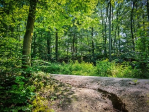 Pfad mündet auf Forstweg