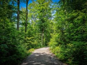 Auf breiterem Forstweg bergan