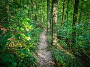 Dem Pfad am Zabelstein sanft bergab folgen