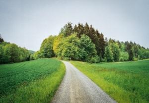 Spritzig zulaufende Waldecke