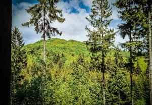 Im Wald bei Bramberg