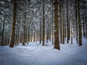 An Abstecher zum Thüringen-Blick vorbei