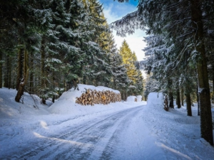 Dem Fahrweg vom Bleßberg herab folgen